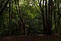 Epping Forest - panoramio - Alexey Komarov.jpg