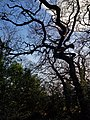 Epping Forest 20180125 150026 (49374536621).jpg