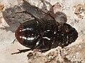 Escaravello - Quintana Roo - México-4.jpg