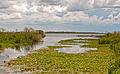 Esteros del Ibera, Corrientes, Argentina, Jan. 2011 - Flickr - PhillipC.jpg