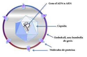 muchas de las enzimas encontradas en las partículas de virus son