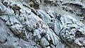 Etagnes et leurs petits au col des Saulces (2371 m) (1).jpg