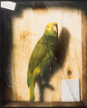 Evans, DeScott - Homage to a Parrot - c. 1890.png