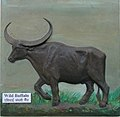 Exhibit of wild buffalo at Regional Museum of Natural History,Bhopal,India.jpg