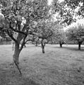 Exterieur overzicht grote boomgaard - 20000423 - RCE.jpg