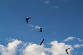 Fåglar-2 (8941148502).jpg