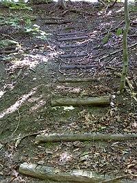 FLT CT6 10.9 mi - 12 log steps - panoramio.jpg