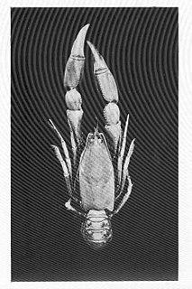 <i>Engaeus</i> genus of crustaceans