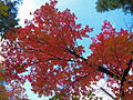 Fall Colors in West Fork - 2010 (5179043136).jpg