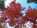 Fall Colors in West Fork - 2010 (5179043136).jpg