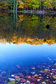 Fall foliage colors lake reflections - West Virginia - ForestWander.jpg