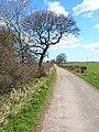 Farm road and bridleway to Humble Knowle Farm, Fishburn - geograph.org.uk - 150199.jpg