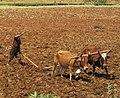 Farmer with Podoconiosis.jpg