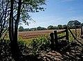 Farmland adjacent to Shrawley Wood - geograph.org.uk - 1484879.jpg