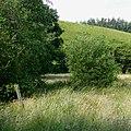 Farmland north of Tregaron, Ceredigion - geograph.org.uk - 929949.jpg