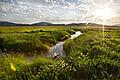 Fen Wetland Restoration (13880796533).jpg
