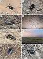 Field photos (10.3897-zookeys.805.29660) Figure 9.jpg