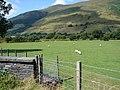 Fields near Dol-ffanog - geograph.org.uk - 214168.jpg