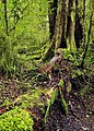 Fiordland N.P. 13.jpg
