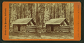 First log hut erected in the grove, Mariposa Grove, by E. & H.T. Anthony (Firm).png