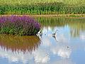 Flickr - Duncan~ - Attenborough Heron.jpg