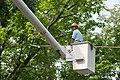 Flickr - USCapitol - AOC Arborist at work.jpg