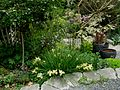 Flickr - brewbooks - Iris in Our Garden - May, 2008 (2).jpg