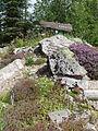 Flore des Carpates-Jardin d'altitude du Haut-Chitelet 01.JPG