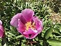 Flores en el Barranco de la Osa (44922664232).jpg