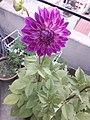 Flower20180527 184526.jpg