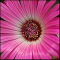 Flower (5707650757).jpg