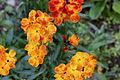 Flower 155 (16356656021).jpg