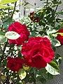 Flower Dortmund 22.jpg