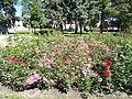 Flower bed, red roses, Béke Grove, 2020 Zalaegerszeg.jpg