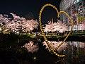 Flower viewing event in Tokyo, Japan; April 2014 (01).jpg