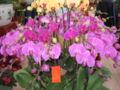 Flowermarket7.jpg