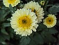 Flowers - Uncategorised Garden plants 75.JPG