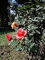 Flowers are blessing of Allah 03.jpg