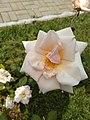 Flowerswhite.jpg