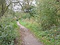 Footpath around Martins Pond - geograph.org.uk - 1040744.jpg