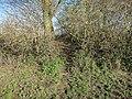 Footpath through the copse - geograph.org.uk - 1577856.jpg