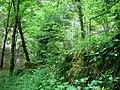 Forêt (Les Planches-près-Arbois) (1).jpg