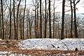 Forêt départementale de Beauplan sous la neige 2012 35.jpg