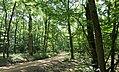 Forêt de Lespinasse (Loire) 004.jpg