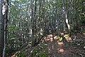 Forêt du pic de l'Aspre, Soula.jpg