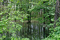 Forest Lakes Cascade 03.JPG