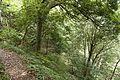 Forest in Mt.Kaba 04.jpg