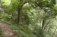 Forest in Mt.Kaba 04.jpg