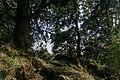 Forest on the Shivapuri peak track, Nepal, 18 May 2019 - 1.jpg