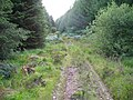Forest path - geograph.org.uk - 511011.jpg